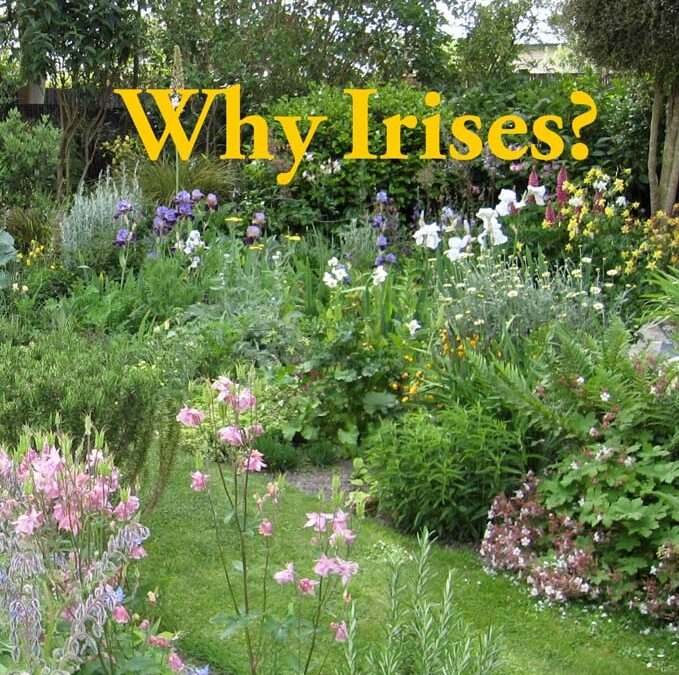 Book Release – Why Irises?