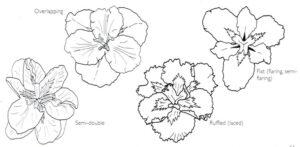 Louisiana drawing