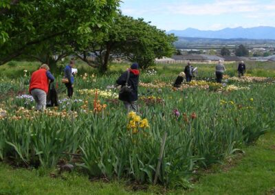 Richmond Iris Garden